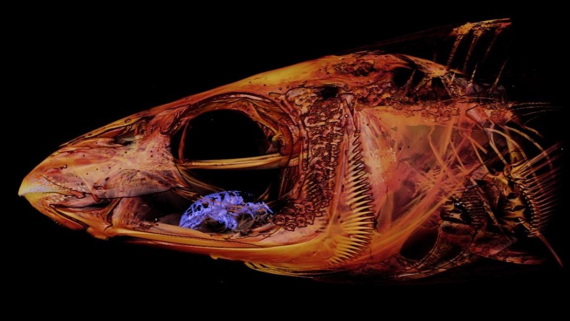 ryba paraziták emberi papillomavírus cikk