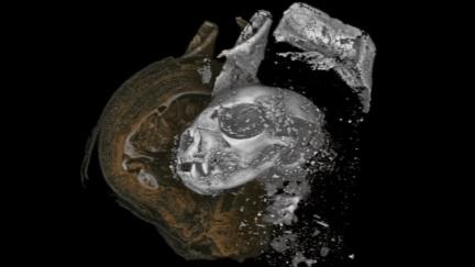 Badatelé digitálně rozbalili tajemné mumie zvířat