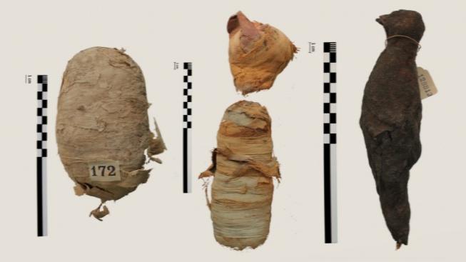 animal-mummies