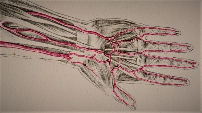 Arteries 3
