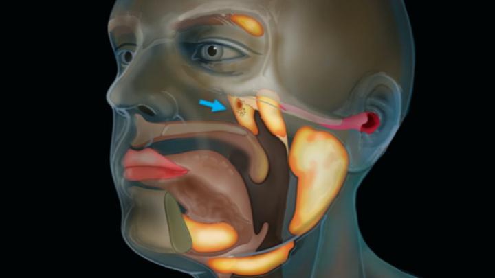 Lékaři nalezli v lidské hlavě nový orgán