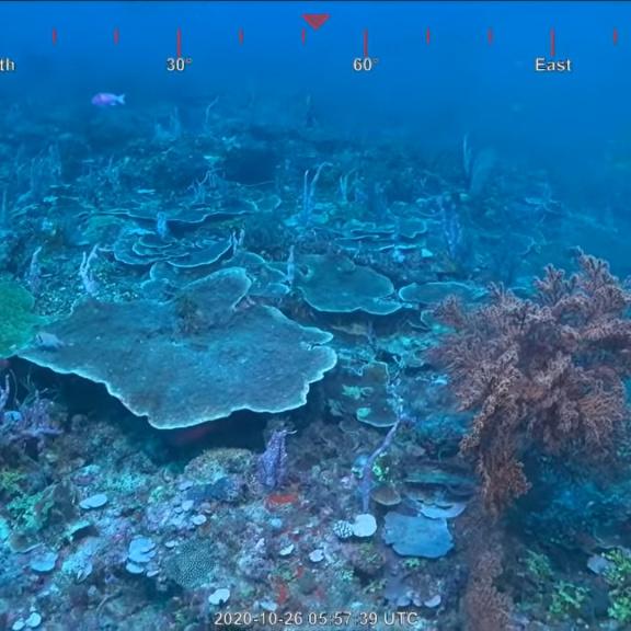Objeven obří  korálový útes, první po 120 letech