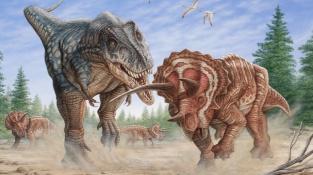 T-rex v souboji Triceratopsem.