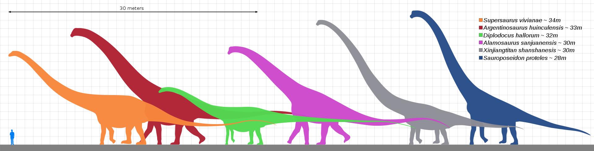 1920px-Longest_dinosaurs2.svg