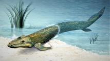Pradávná cesta živočichů z vody na souš objevena v genech divné ryby