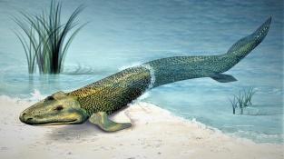 Z vody na souš. Tiktaalik patřil před 400 miliony let k průkopníkům tehdy nové disciplíny.