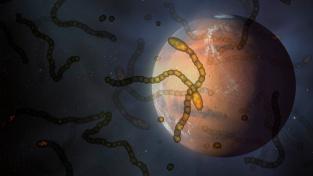 Koncepční ilustrace mikrobů a Marsu.