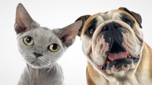 Kočky vidí společenství lidí jinak než psi.