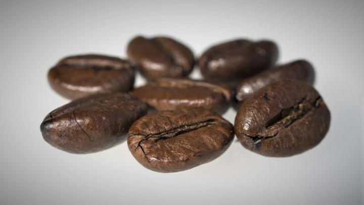 Biologové oživili plíseň, která kradla geny a téměř vyhubila kávu