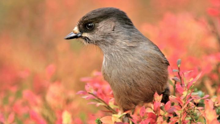 Tento pták dokáže lhát, až se mu od zobáku práší