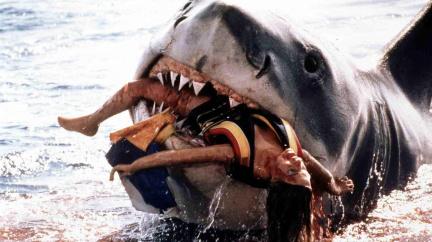 Vraždící žralok, který inspiroval filmaře a donutil odborníky k zamyšlení