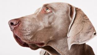 Pes pozná, když mu lžete. Je v tom dokonce lepší než malé dítě