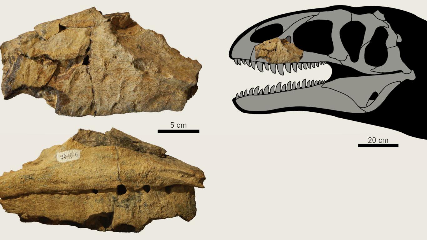 Ulughbegsaurus a44-21