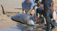 Nález, který vědce ohromil: Velryba měla pod ploutví nohu s prsty