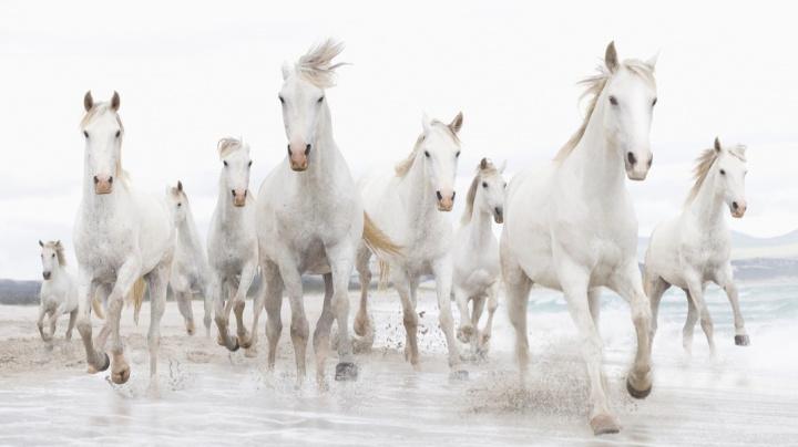 Odhalen původ koně, který nakopl naši civilizaci