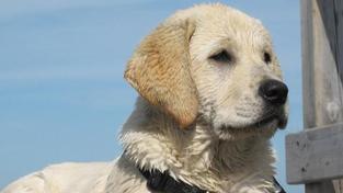 Psi dokážou čichem odhalit rakovinu plic