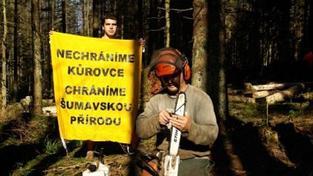 Aktivisté jsou připraveni blokovat kácení na Šumavě i v září