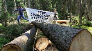 Modrava: Anonym nahlásil bombu, práce dřevorubců však pokračují
