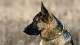Muž z Jesenicka žádal policisty o ochranu před svým psem