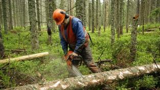 Na Šumavě se budou dál kácet desítky stromů