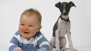 Dítě a pes v jedné domácnosti?