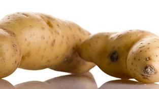 Velká Británie: Muž vypěstoval největší bramboru na světě