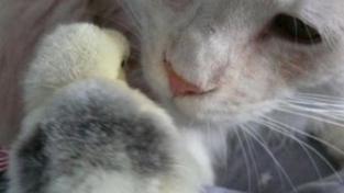 Rusko: Exekutoři zabaví kočku, pejska, pas i ferrari