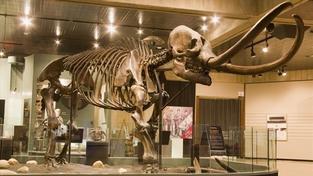 Vědci se radují: V Srbsku nalezli obří pohřebiště mamutů