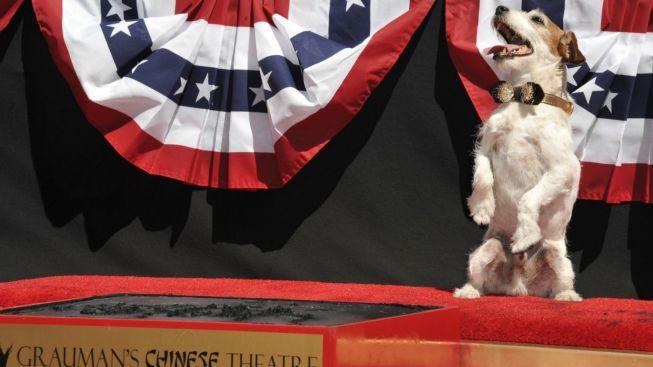 Teriér Uggie z oscarového filmu The Artist má otisky tlapek v Hollywoodu