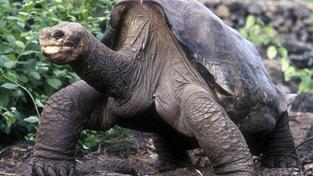 Vědci chtějí na Galapágách oživit mrtvé druhy