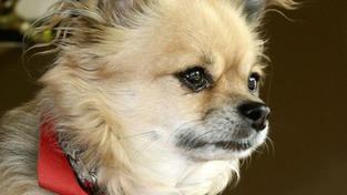 Spor o odškodné za nejmenšího psíka skončil verdiktem ÚS