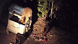 Kuriózní případ z Tater: Medvěd vyskočil na muže (31) přímo z popelnice