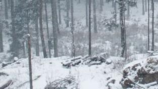 O víkendu se výrazně ochladí, na hory se vrátí sníh