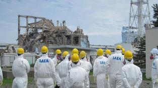 Ryby z oblasti Fukušimy jsou stále kontaminované