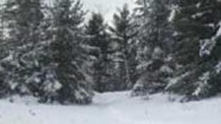 Ochlazení v ČR: V noci bude mrznout, na horách sněžit