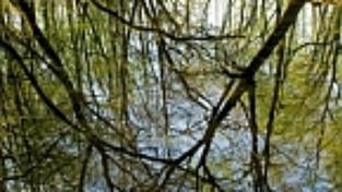 Tropický prales po česku