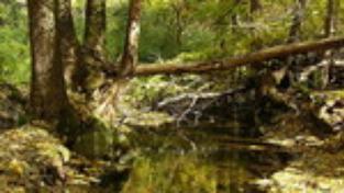 Hluboké lesy Bükku