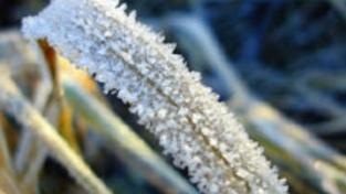 Leden bude mrazivý, sněžit však bude málo