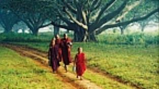 Zdivočelá  Barma