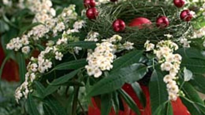 Tradiční beskydské Vánoce