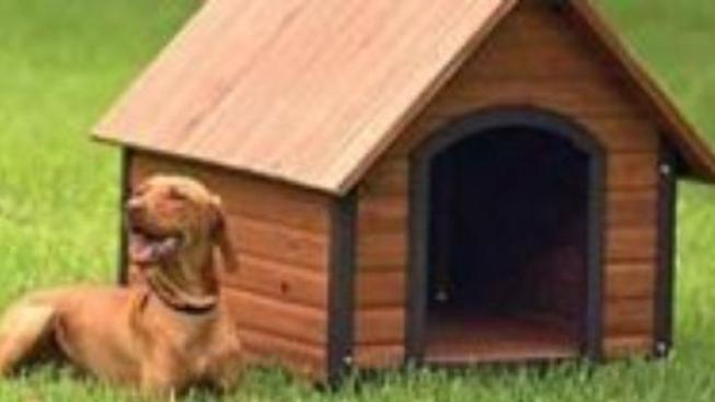 Pes pro zdraví