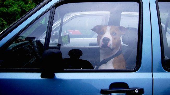 Opilý řidič tvrdil policistům, že řídil jeho pes