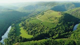 Dnešní ranní mráz poškodil až z 50 procent moravské vinice
