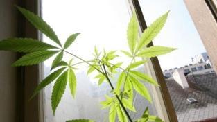 V Nizozemsku začíná platit zákaz prodeje marihuany cizincům