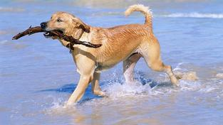 Dog TV - nový televizní kanál pro vaše čtyřnohé miláčky!