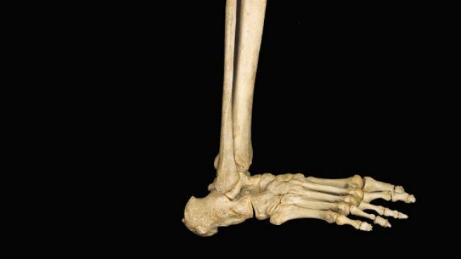 U Vltavy byla v Praze nalezena lidská noha čistě uříznutá pod kolenem