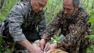 Putin v roce 2008 zkrotil tygra: jednalo se o podvod?