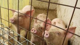 Téměř každé druhé zemědělské firmě v Česku hrozí krach