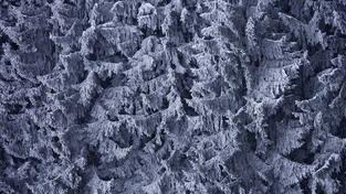Česko má za sebou mrazivou noc. Teploty klesly na minus 15 stupňů