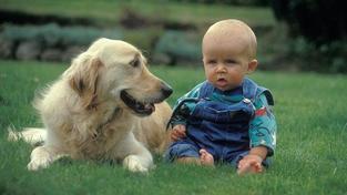 Čekáte dítě? Připravte na to i svého psa